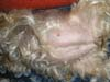 Jorkšírský Teriér štěňata